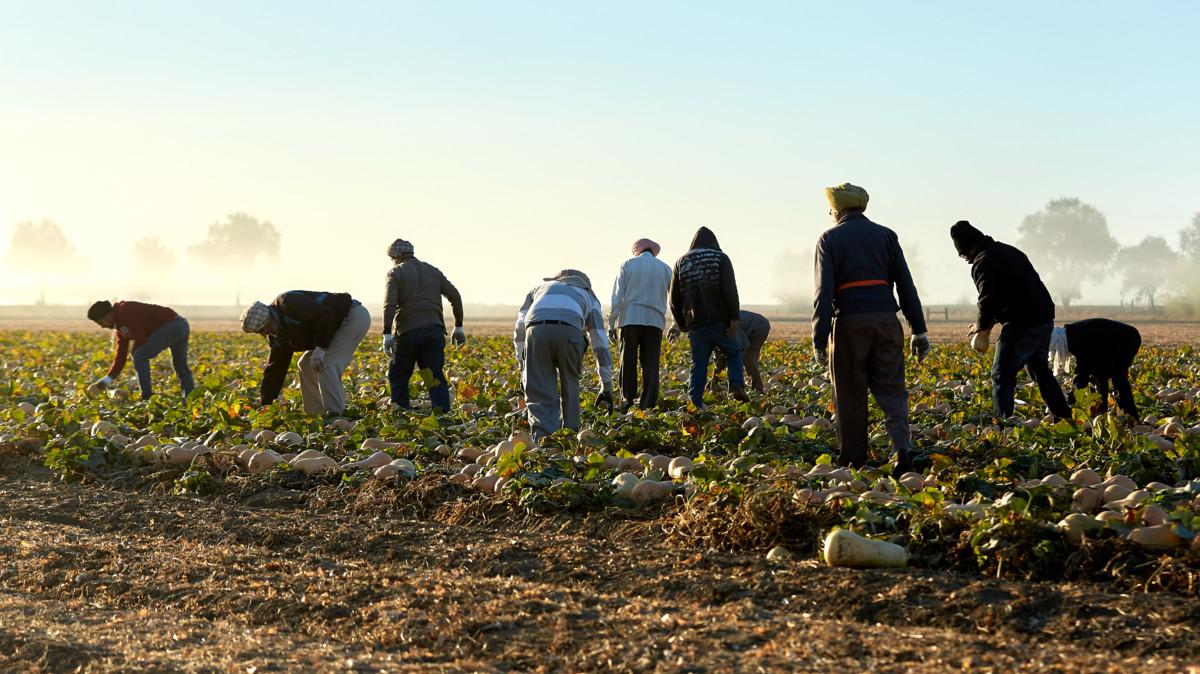 Amy's farmers in the field