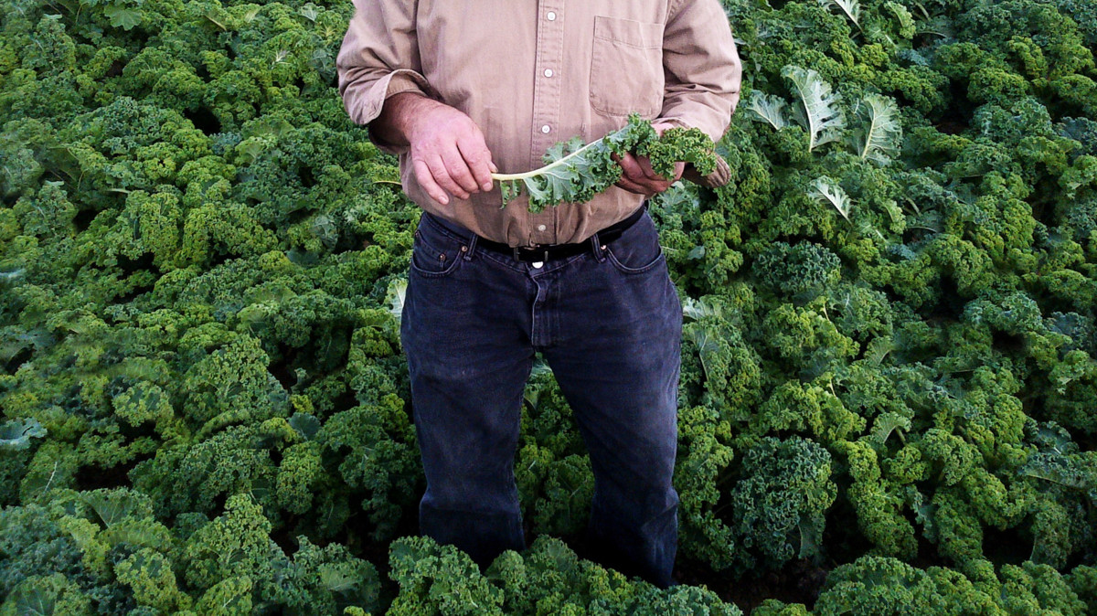 Amy's man in kale field