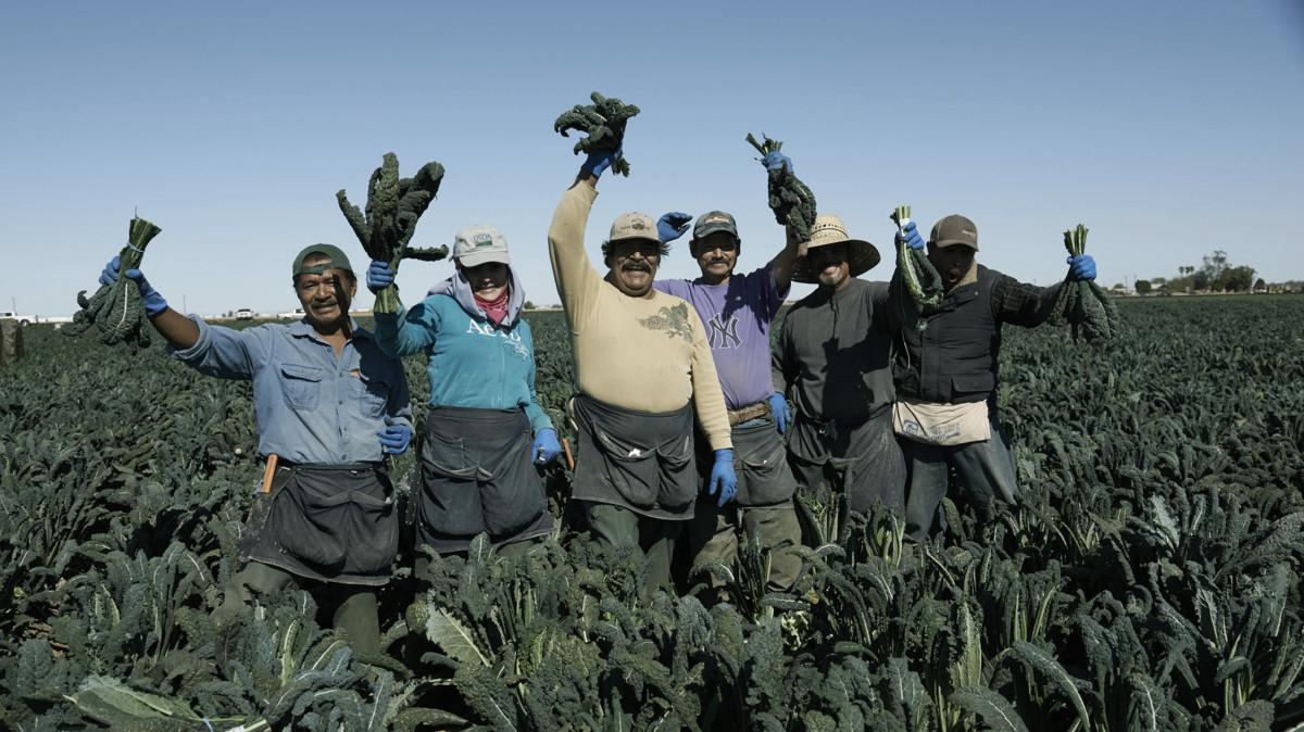 Amy's kale farmers