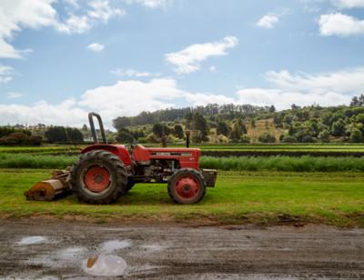 Amy's - Farming