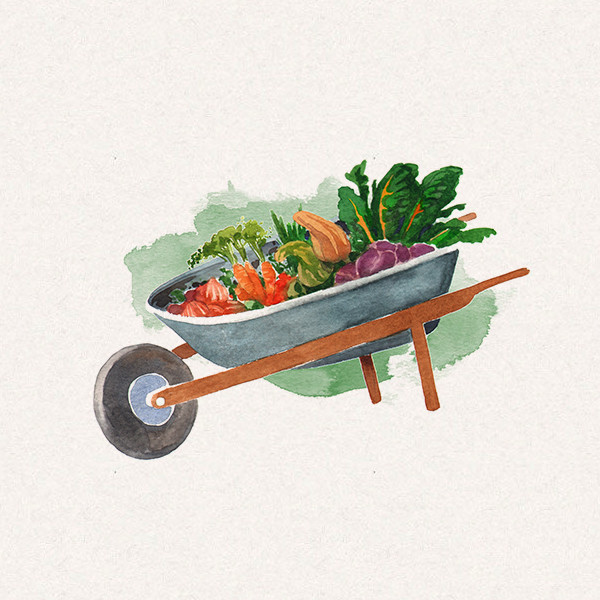 Amy's wheelbarrow filled with vegetables